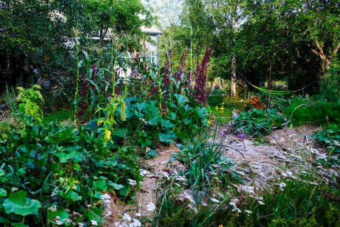 Orto in permacultura